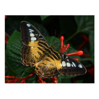 Carte Postale Papillon avec les taches bleues sur des ailes