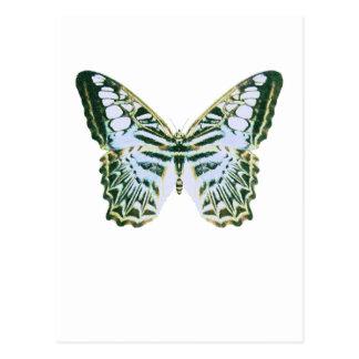 Carte Postale Papillon bleu de tondeuse