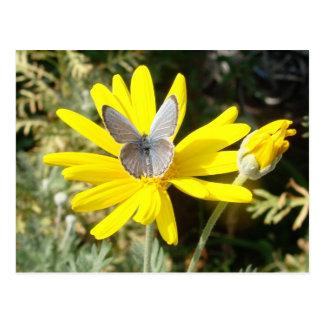 Carte Postale Papillon bleu poussiéreux