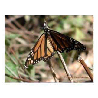 Carte Postale Papillon-carte postale de monarque