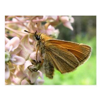 Carte Postale Papillon de capitaine sur des fleurs de Milkweed