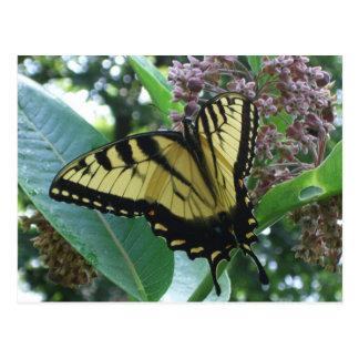 Carte Postale Papillon de machaon I sur le Milkweed chez