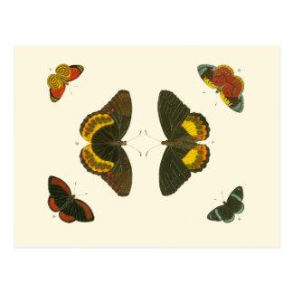 Carte Postale Papillons lumineux par Pieter Cramer