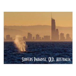 Carte Postale Paradis Queensland de surfers de baleines de