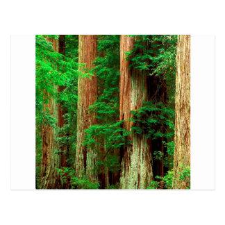 Carte Postale Parc antique de séquoia de bassin de Giants de