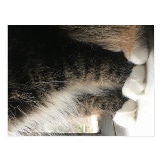 Carte Postale Pattes pelucheuses de chat