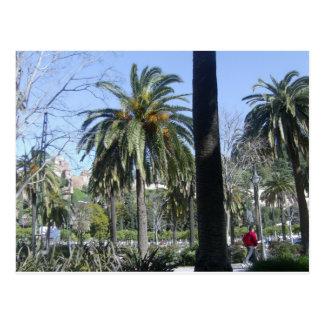 Carte Postale Paumes à Malaga