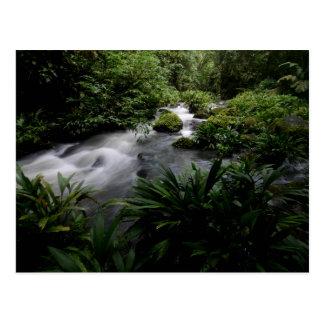Carte Postale Paysage Amazone de rivière de courant de jungle