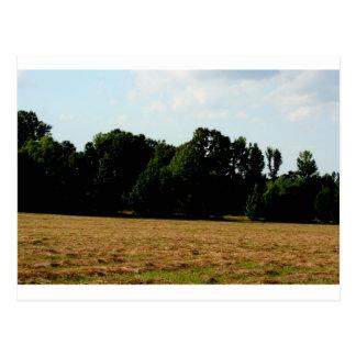 Carte Postale paysage de prairie de fauche