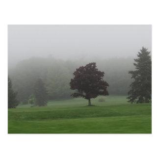 Carte Postale Paysage rempli par brouillard