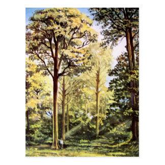 Carte Postale Peinture acrylique de forêt de Vierge