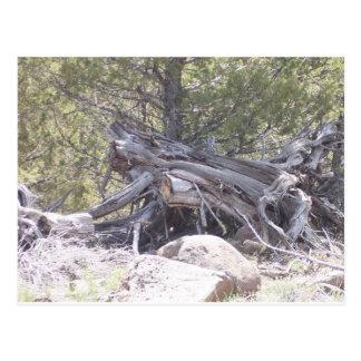 Carte Postale Pêle-mêle de bois vieillissant