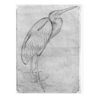 Carte Postale Pélican, le de l'album de Vallardi