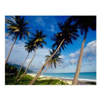Carte Postale Péninsule de Samana de La, République Dominicaine,