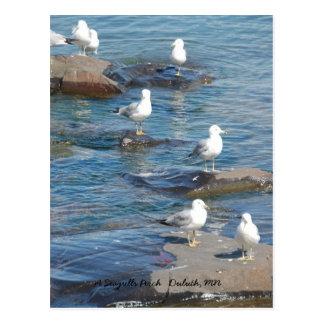 Carte Postale Perche de mouettes, une perche Duluth   ,
