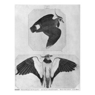 Carte Postale Perruches, le de l'album de Vallardi