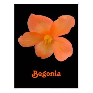 Carte postale personnalisable de beau bégonia