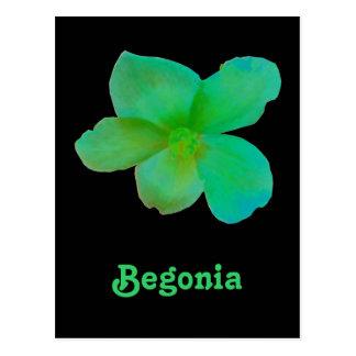 Carte postale personnalisable de bégonia vert