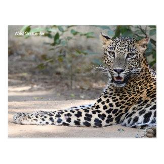 Carte postale personnalisable de léopard du Sri