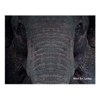 Carte postale personnalisable d'éléphant du Sri