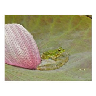 Carte Postale Pétale de fleur de grenouille et de lotus, Chine,