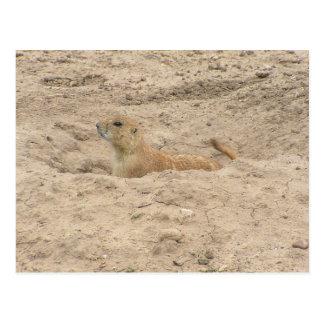 Carte Postale Petit chien de prairie vigilant