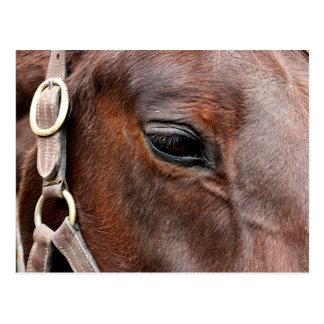 Carte Postale Photo de cheval