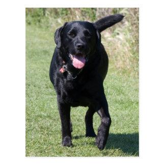 Carte Postale Photo de chien noir de labrador retriever belle