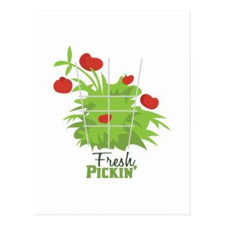 Carte Postale Pickin frais