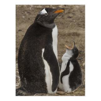 Carte Postale Pingouin de Gentoo (Pygoscelis Papouasie) et