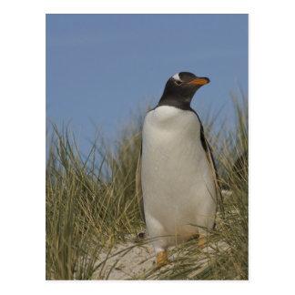 Carte Postale Pingouin de Gentoo (Pygoscelis Papouasie), Keppel