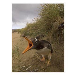 Carte Postale pingouin de gentoo, Pygoscelis Papouasie, sur le