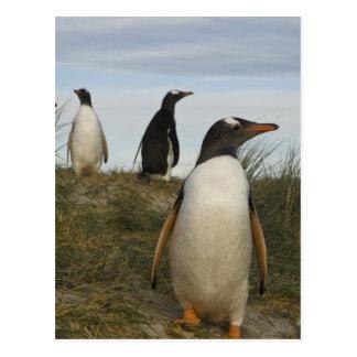 Carte Postale Pingouins de Gentoo (Pygoscelis Papouasie), Keppel