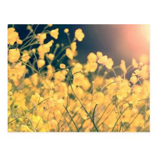 Carte postale pittoresque de fleurs