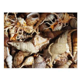 Carte Postale Plan rapproché des coquillages tropicaux
