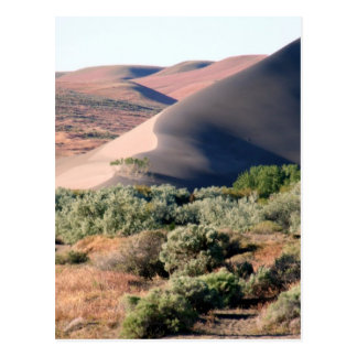 Carte Postale Point de dunes de Bruneau