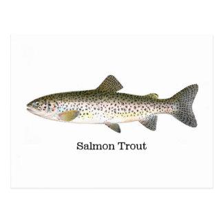 Carte Postale Poissons de truite saumonée