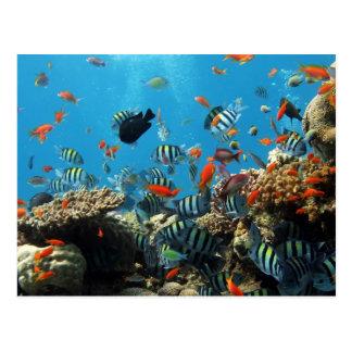 Carte Postale Poissons Naturescape de récif coralien