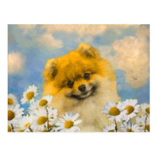 Carte Postale Pomeranian dans les marguerites