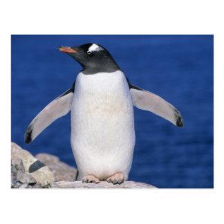 Carte Postale Port de la Papouasie de Pygoscelis de pingouin de