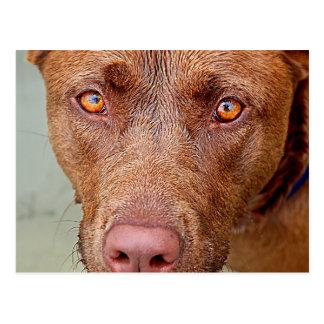 Carte Postale Portrait 2 de chien de mélange de mine de