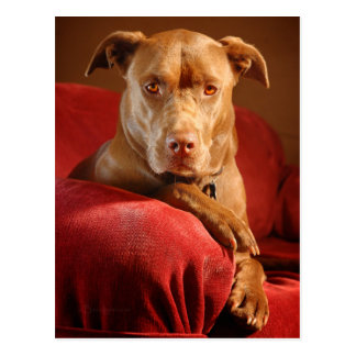 Carte Postale Portrait 3 de chien de mélange de mine de