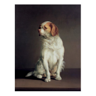 Carte Postale Portrait d'un épagneul du Roi Charles