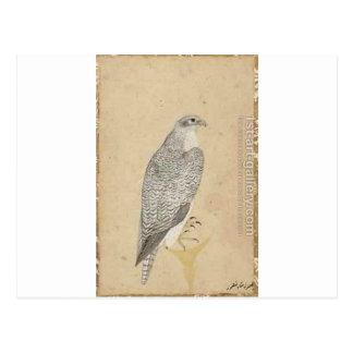 Carte Postale Portrait d'un faucon d'Inde du nord