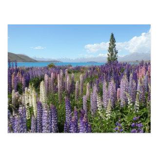 Carte postale pourpre de fleurs sauvages