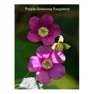 carte postale Pourpre-fleurissante de fleur