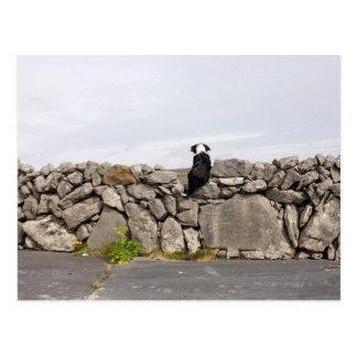 Carte Postale Poursuivez se reposer sur un mur en pierre