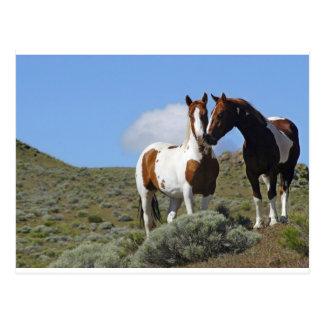 Carte Postale Pousser du nez des chevaux