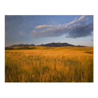 Carte Postale Prairies de Praire dans les collines du
