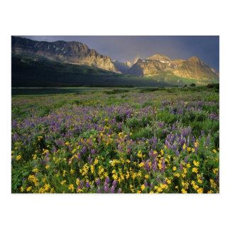 Carte Postale Pré de suffisance de fleurs sauvages de prairie
